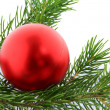 Christmas branch fur-tree with ball — Stock Photo