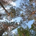 Tree and sky — Stock Photo #1517066