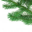Christmas branch fir-tree — Photo