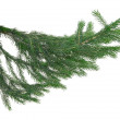 Foto Stock: Branch of fir-tree