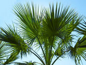 Silhouette of palm tree — Stock Photo