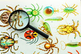 Collection of beetles and Magnifier — Stock Photo