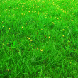 Green grass meadow — Stock Photo #1533508