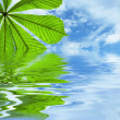 Leaf reflected in water — Stock Photo #1533808