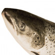 Fish trout isolated — Stock Photo #1535897