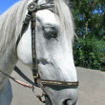 Head of horse — Stock Photo