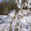 Frosty twig — Stock fotografie