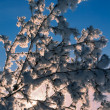 Snowy tree — Stock fotografie