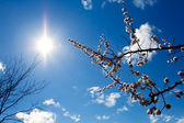 Twigs and sun — Stock Photo