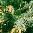 Fir-tree — Stock Photo #1591325