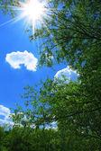 Summer day at noon — Stock Photo