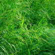 Grass after thunderstorm — Stock Photo