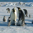 Foto Stock: Family of penguins