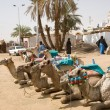 Stock Photo: Egypt village with camels