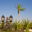 Streetlights with palms — Stock Photo