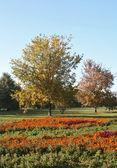 Autumn, bright glade — Stock Photo