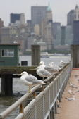 New-York cityscape wirh seagulls — Stock Photo