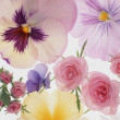 Stock Photo: Background of Flowers and Plants
