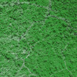 Royalty-Free Stock Photo: TEXTURE OLD CEMENT WALL