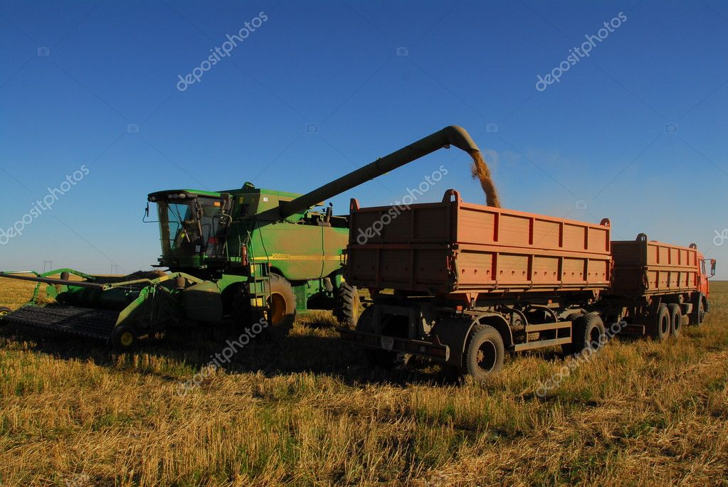 Wheat bread field. combine and lorry and blue sky.Cleaning the harvest of bread.Beautiful gold, yellow wheat bread field on blue sky — Stock Photo #1876036