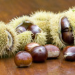 Chestnut still life — Stock Photo