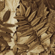 Leafs sepia - Stock Photo