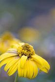 Autumn flowers — Stock Photo