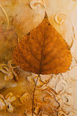 Pressed leaf — Stock Photo