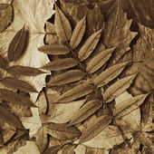 Leafs sepia — Stock Photo