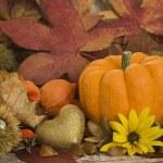 Autumn Still l ife — Stock Photo