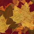 Maple leaf background — Stock Photo