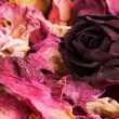 Stock Photo: Potpourri of dry flowers
