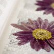Stock Photo: Pressed flower