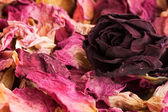 Potpourri of dry flowers — Stock Photo