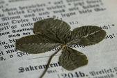 Clavo de cuatro hojas — Foto de Stock