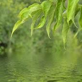 Kvist med grönt blad — Stockfoto