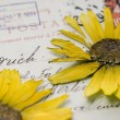 Stock Photo: Pressed flower on postcard