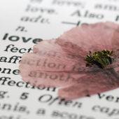 Poppy flower on book — Stock Photo