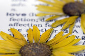 Flower on book — Stock Photo