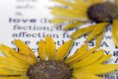 Blume auf buch — Stockfoto