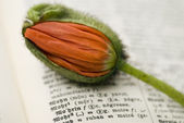 Poppy bloem op woordenboek — Stockfoto