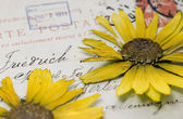 Pressed flower on postcard — Stock Photo