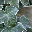 Vegetation in winter — Stock Photo