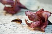 Natureza-morta com flores — Foto Stock