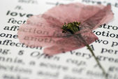 书上的罂粟花卉 — 图库照片