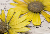 Pressed flower on letter — Stock Photo
