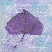 Liść na tekst tło — Zdjęcie stockowe