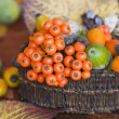 Autumn Still life — Stockfoto #2278299