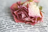 Suchý růže — Stock fotografie