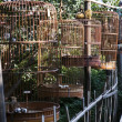 Bird cages in china — Stock Photo #2393594